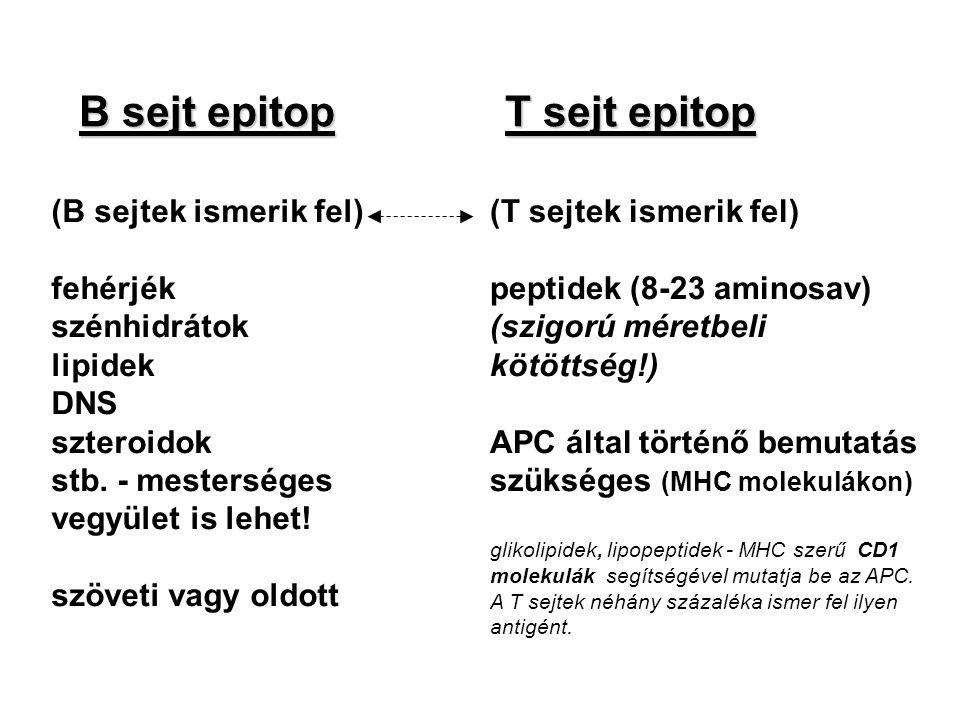 B sejt epitop T sejt epitop (B sejtek ismerik fel) fehérjék szénhidrátok lipidek DNS szteroidok stb. - mesterséges vegyület is lehet! szöveti vagy old