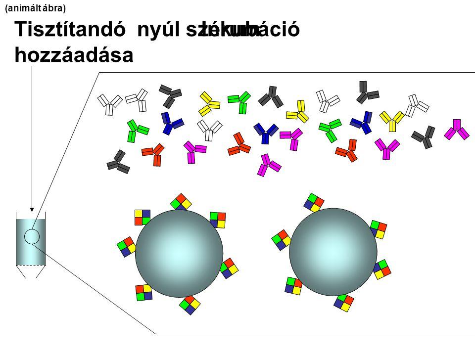 Tisztítandó nyúl szérum hozzáadása Inkubáció (animált ábra)