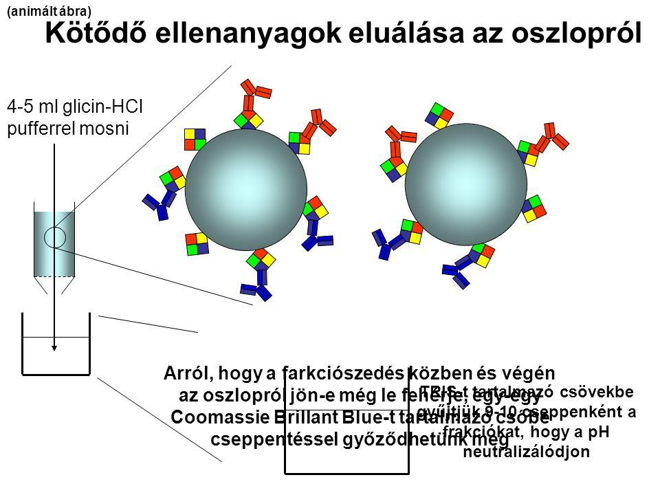 4-5 ml glicin-HCl pufferrel mosni Kötődő ellenanyagok eluálása az oszlopról TRIS-t tartalmazó csövekbe gyűjtjük 9-10 cseppenként a frakciókat, hogy a