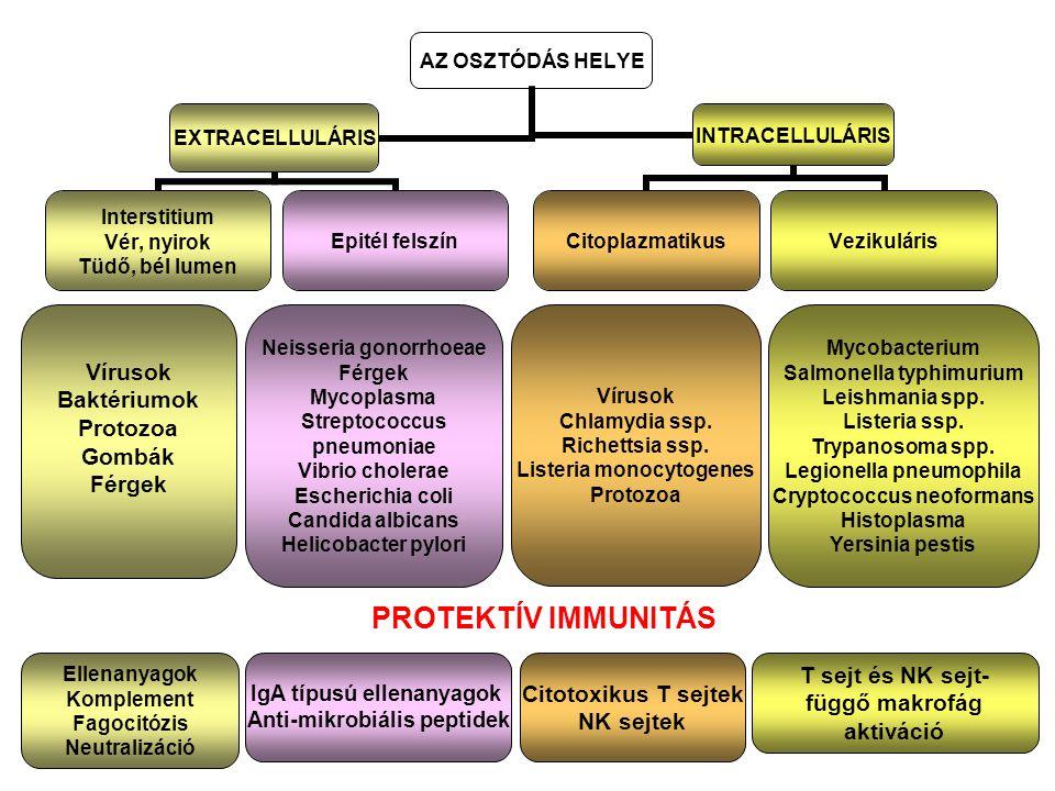 AZ OSZTÓDÁS HELYE EXTRACELLULÁRIS Interstitium Vér, nyirok Tüdő, bél lumen Epitél felszín INTRACELLULÁRIS CitoplazmatikusVezikuláris Vírusok Baktériumok Protozoa Gombák Férgek Neisseria gonorrhoeae Férgek Mycoplasma Streptococcus pneumoniae Vibrio cholerae Escherichia coli Candida albicans Helicobacter pylori Vírusok Chlamydia ssp.