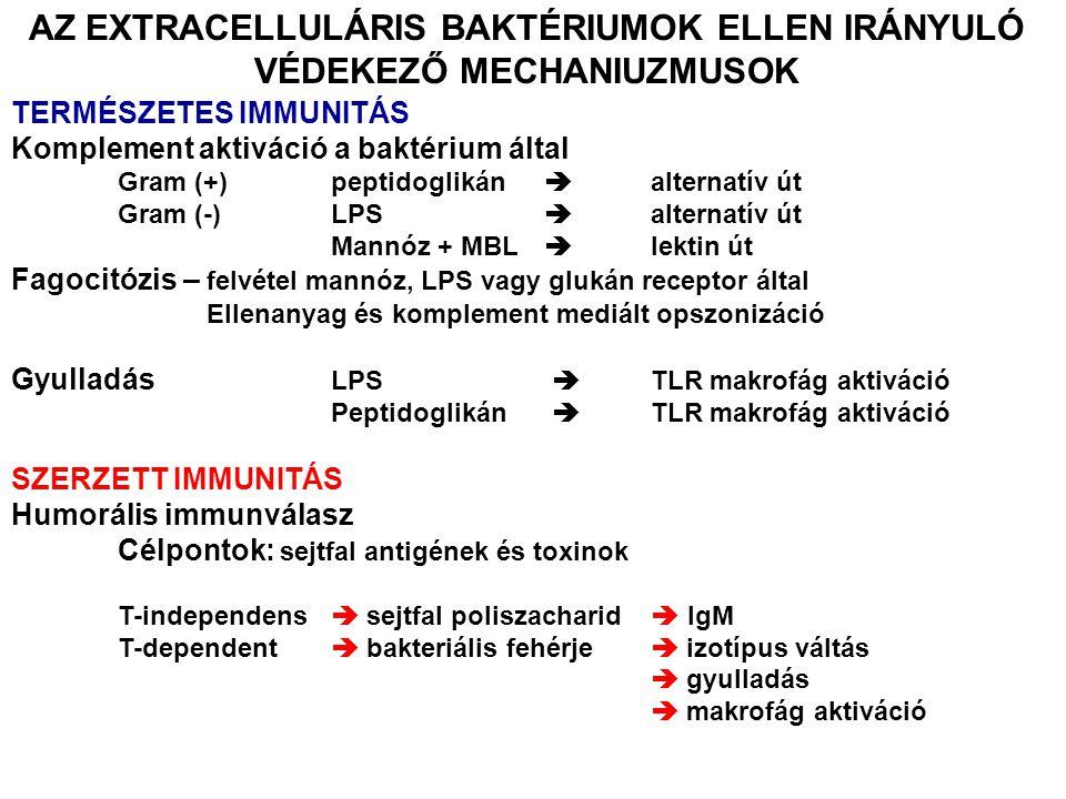 AZ EXTRACELLULÁRIS BAKTÉRIUMOK ELLEN IRÁNYULÓ VÉDEKEZŐ MECHANIUZMUSOK TERMÉSZETES IMMUNITÁS Komplement aktiváció a baktérium által Gram (+)peptidoglikán  alternatív út Gram (-)LPS  alternatív út Mannóz + MBL  lektin út Fagocitózis – felvétel mannóz, LPS vagy glukán receptor által Ellenanyag és komplement mediált opszonizáció Gyulladás LPS  TLR makrofág aktiváció Peptidoglikán  TLR makrofág aktiváció SZERZETT IMMUNITÁS Humorális immunválasz Célpontok: sejtfal antigének és toxinok T-independens  sejtfal poliszacharid  IgM T-dependent  bakteriális fehérje  izotípus váltás  gyulladás  makrofág aktiváció
