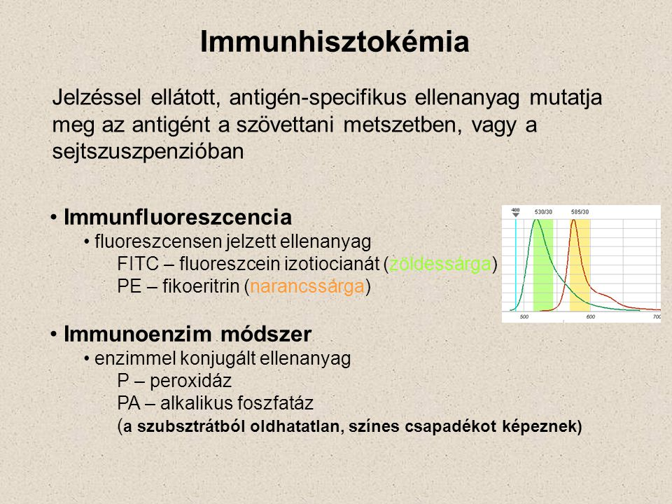 Immunhisztokémia Jelzéssel ellátott, antigén-specifikus ellenanyag mutatja meg az antigént a szövettani metszetben, vagy a sejtszuszpenzióban Immunflu
