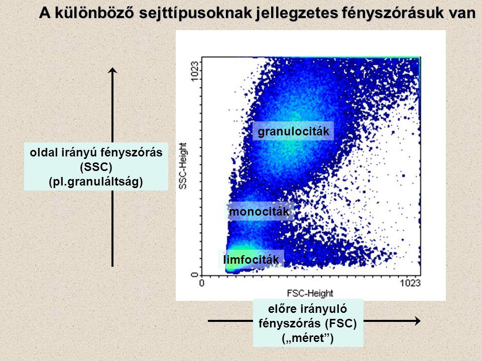 """A különböző sejttípusoknak jellegzetes fényszórásuk van előre irányuló fényszórás (FSC) (""""méret"""") oldal irányú fényszórás (SSC) (pl.granuláltság) gran"""