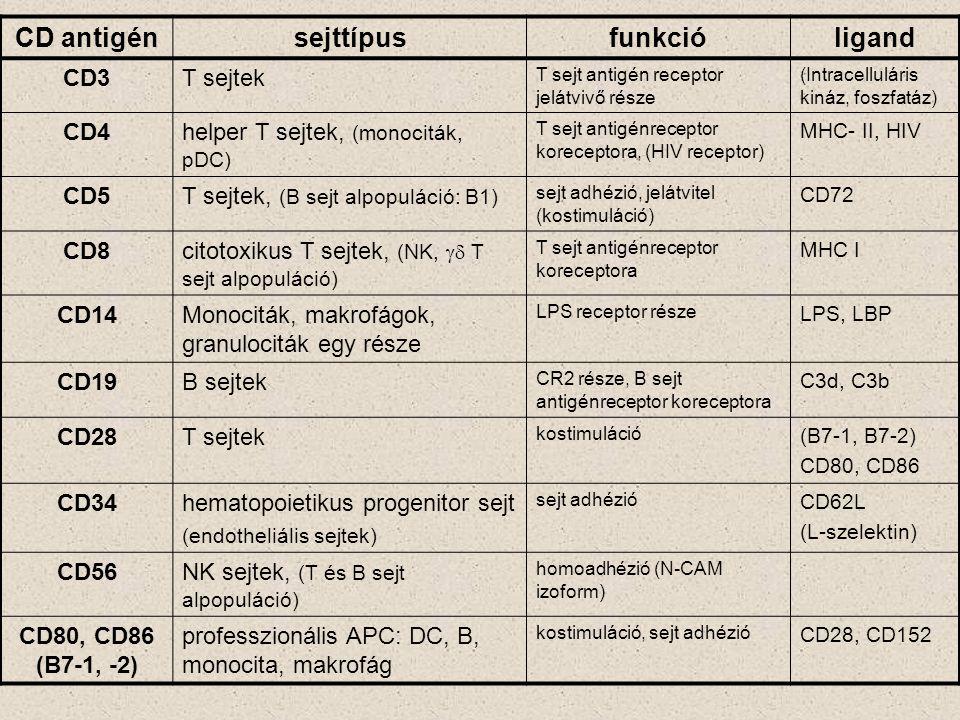 CD antigénsejttípusfunkcióligand CD3T sejtek T sejt antigén receptor jelátvivő része (Intracelluláris kináz, foszfatáz) CD4helper T sejtek, (monociták