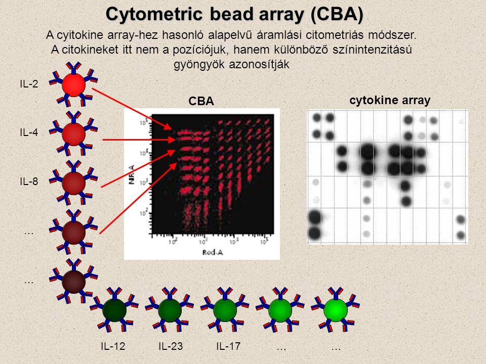 Cytometric bead array (CBA) A cyitokine array-hez hasonló alapelvű áramlási citometriás módszer. A citokineket itt nem a pozíciójuk, hanem különböző s