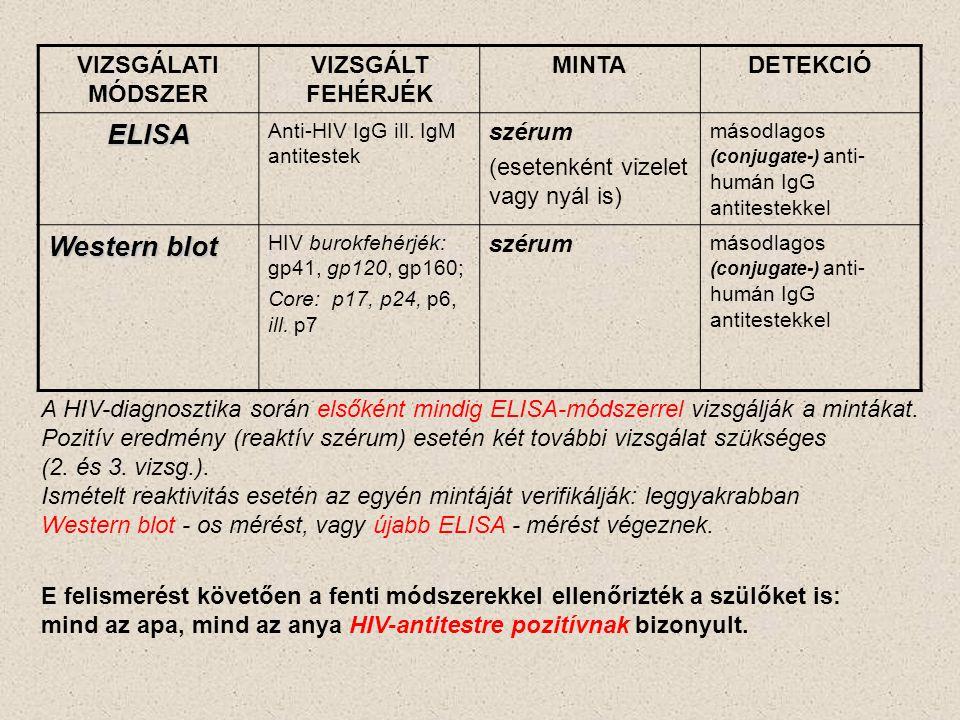 VIZSGÁLATI MÓDSZER VIZSGÁLT FEHÉRJÉK MINTADETEKCIÓ ELISA Anti-HIV IgG ill. IgM antitestek szérum (esetenként vizelet vagy nyál is) másodlagos (conjuga