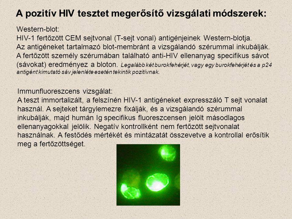 A pozitív HIV tesztet megerősítő vizsgálati módszerek: Western-blot: HIV-1 fertőzött CEM sejtvonal (T-sejt vonal) antigénjeinek Western-blotja. Az ant