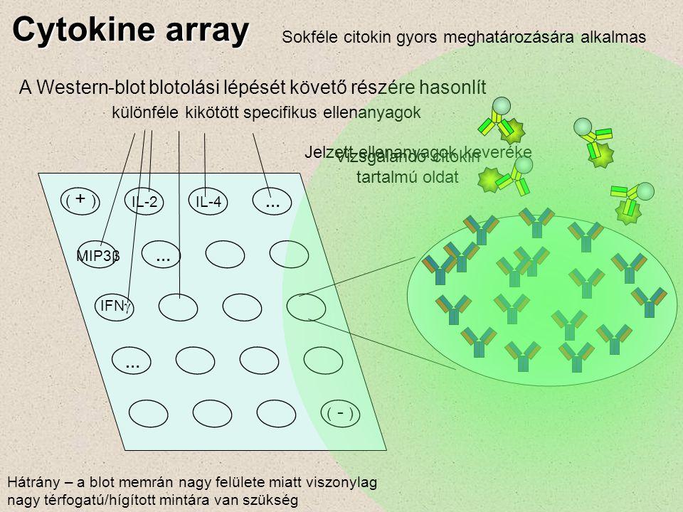 Cytokine array A Western-blot blotolási lépését követő részére hasonlít ( - ) IFN  ( + ) IL-2IL-4… … MIP3β… különféle kikötött specifikus ellenanyago