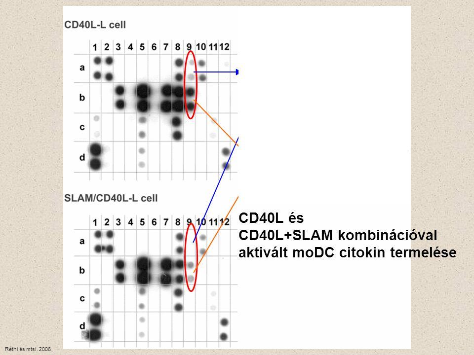 CD40L és CD40L+SLAM kombinációval aktivált moDC citokin termelése Réthi és mtsi. 2006