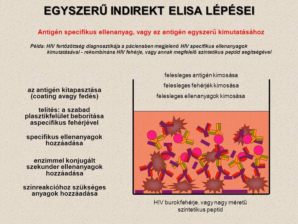EGYSZERŰ INDIREKT ELISA LÉPÉSEI Antigén specifikus ellenanyag, vagy az antigén egyszerű kimutatásához az antigén kitapasztása (coating avagy fedés) fe
