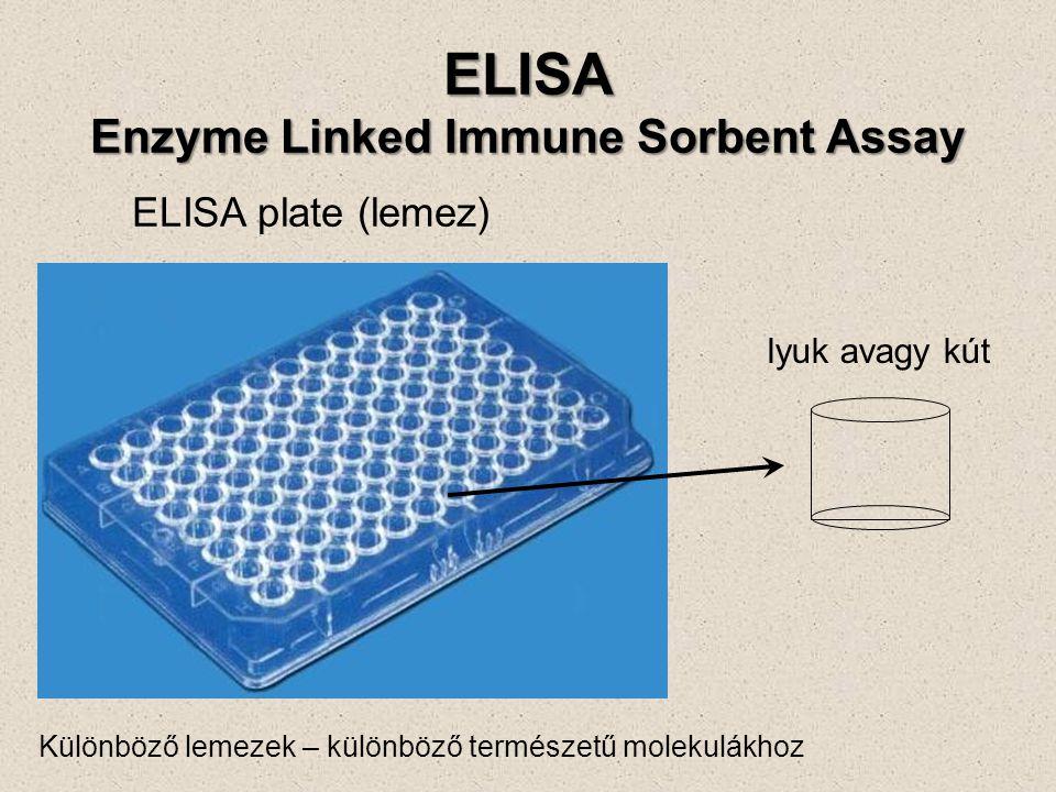 ELISA plate (lemez) lyuk avagy kút Különböző lemezek – különböző természetű molekulákhoz ELISA Enzyme Linked Immune Sorbent Assay
