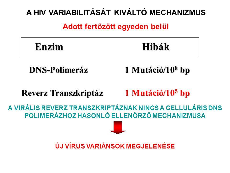 1 Mutáció/10 5 bp Reverz Transzkriptáz DNS-Polimeráz 1 Mutáció/10 8 bp HibákEnzim A HIV VARIABILITÁSÁT KIVÁLTÓ MECHANIZMUS Adott fertőzött egyeden bel