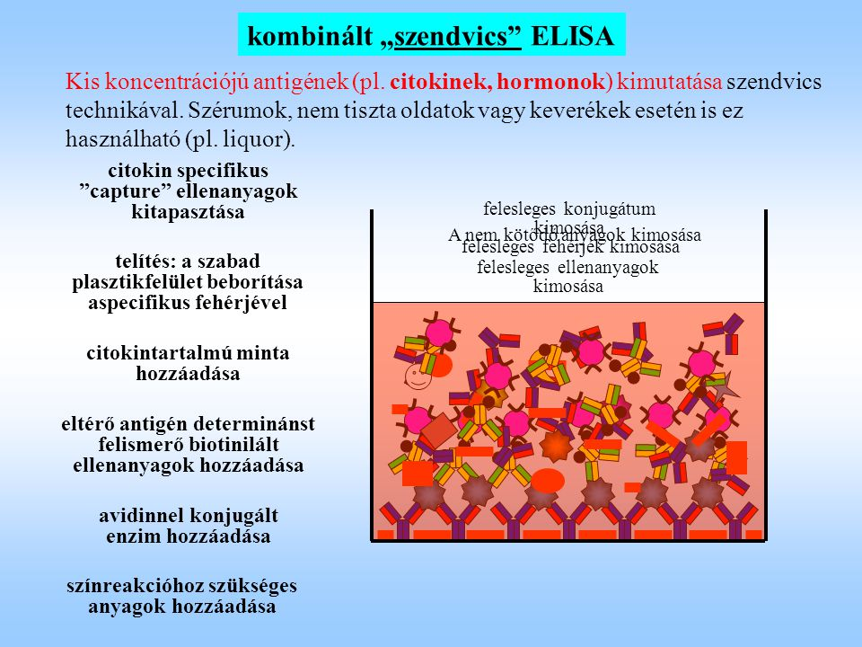 """kombinált """"szendvics"""" ELISA Kis koncentrációjú antigének (pl. citokinek, hormonok) kimutatása szendvics technikával. Szérumok, nem tiszta oldatok vagy"""