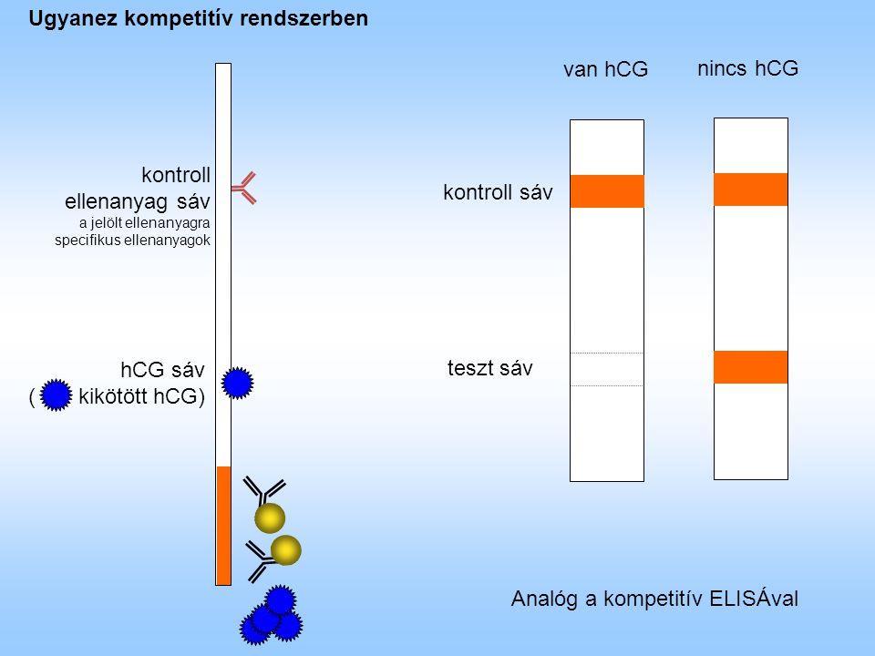 hCG sáv ( kikötött hCG) kontroll ellenanyag sáv a jelölt ellenanyagra specifikus ellenanyagok kontroll sáv teszt sáv van hCG nincs hCG Ugyanez kompetitív rendszerben Analóg a kompetitív ELISÁval