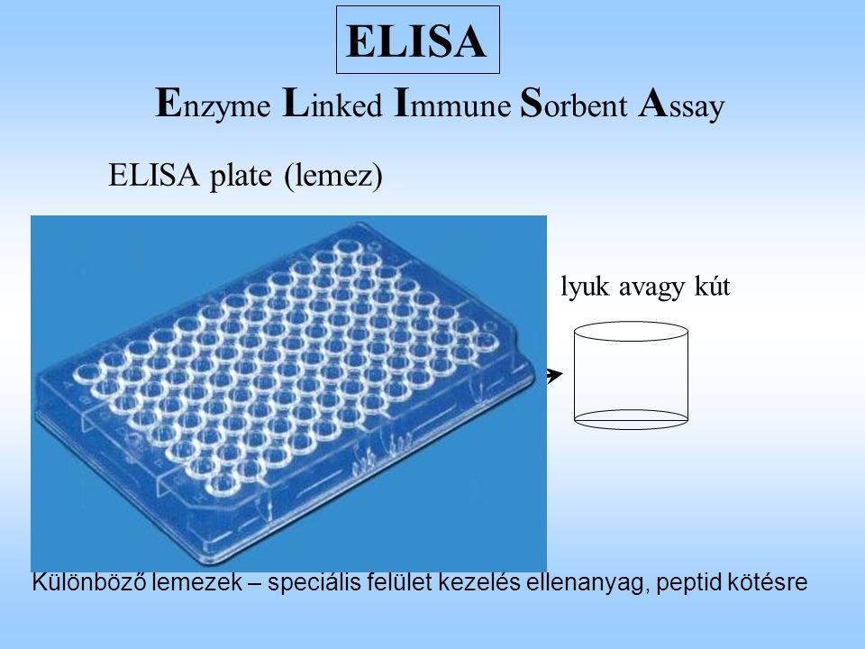 egyszerű indirekt ELISA lépései Antigén specifikus ellenanyag, vagy az antigén egyszerű kimutatásához az antigén kitapasztása (coating avagy fedés) felesleges antigén kimosása telítés: a szabad plasztikfelület beborítása aspecifikus fehérjével felesleges fehérjék kimosása specifikus ellenanyagok hozzáadása Enzimmel konjugált szekunder ellenanyagok hozzáadása felesleges ellenanyagok kimosása színreakcióhoz szükséges anyagok hozzáadása Példa: HIV fertőzöttség diagnosztikája a páciensben megjelenő HIV specifikus ellenanyagok kimutatásával - rekombináns HIV fehérje, vagy annak megfelelő szintetikus peptid segítségével HIV burokfehérje, vagy nagy méretű szintetikus peptid