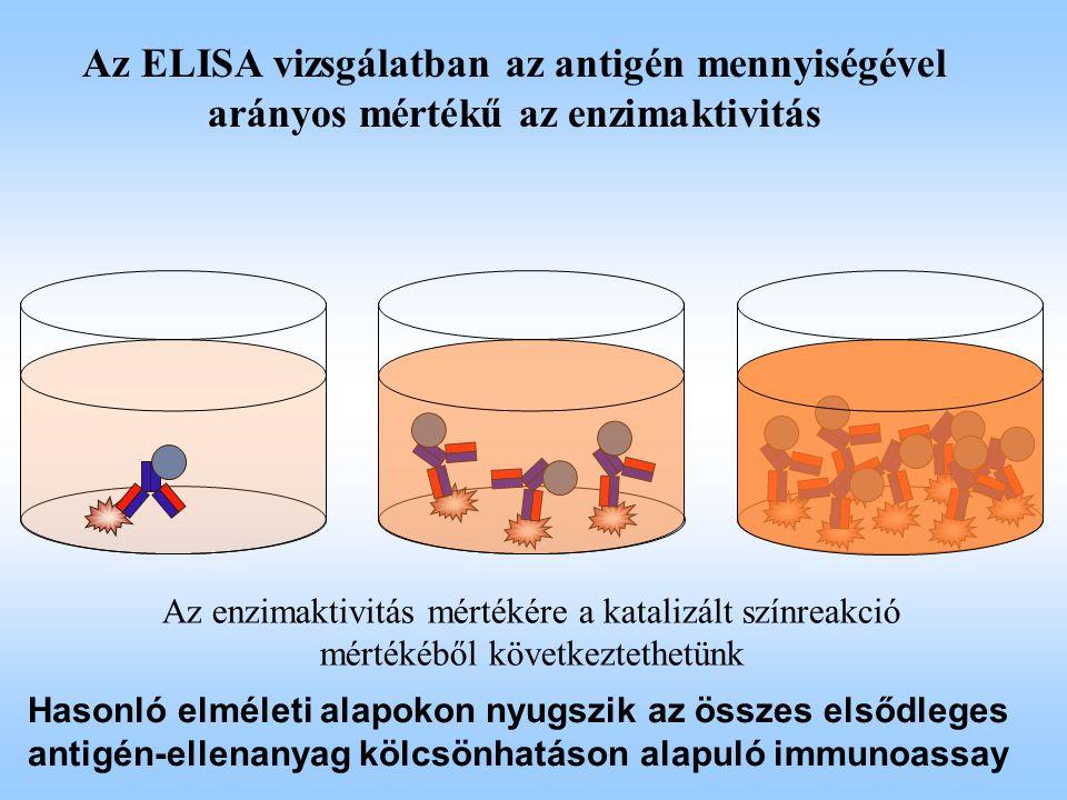 Az ELISA vizsgálatban az antigén mennyiségével arányos mértékű az enzimaktivitás Az enzimaktivitás mértékére a katalizált színreakció mértékéből követ