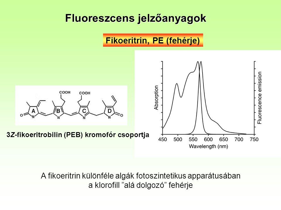 Fikoeritrin, PE (fehérje) 3Z-fikoeritrobilin (PEB) kromofór csoportja Fluoreszcens jelzőanyagok A fikoeritrin különféle algák fotoszintetikus apparátusában a klorofill alá dolgozó fehérje