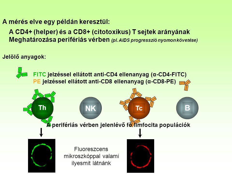 B NK Th Tc A mérés elve egy példán keresztül: A CD4+ (helper) és a CD8+ (citotoxikus) T sejtek arányának Meghatározása perifériás vérben (pl.