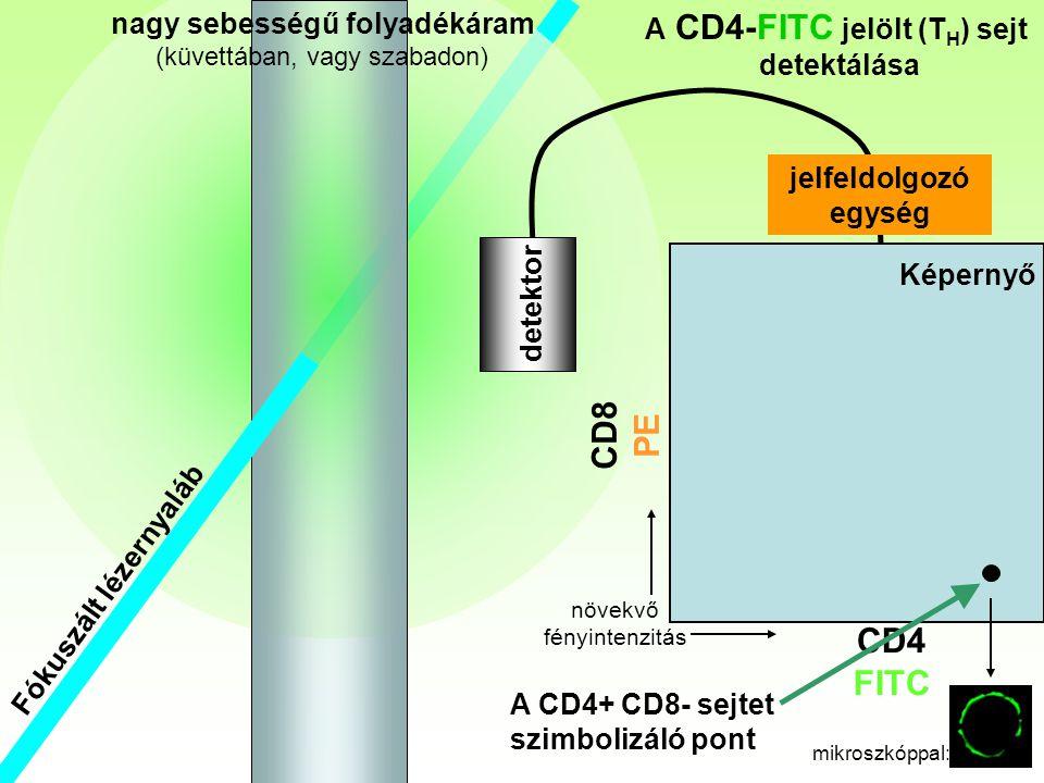 Fókuszált lézernyaláb Th nagy sebességű folyadékáram (küvettában, vagy szabadon) CD4 FITC CD8 PE detektor A CD4-FITC jelölt (T H ) sejt detektálása jelfeldolgozó egység Képernyő A CD4+ CD8- sejtet szimbolizáló pont növekvő fényintenzitás mikroszkóppal: