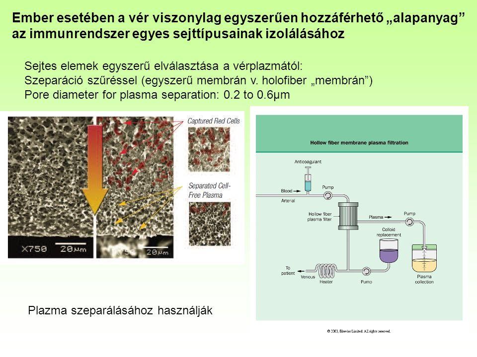 Sejtes elemek egyszerű elválasztása a vérplazmától: Szeparáció szűréssel (egyszerű membrán v.