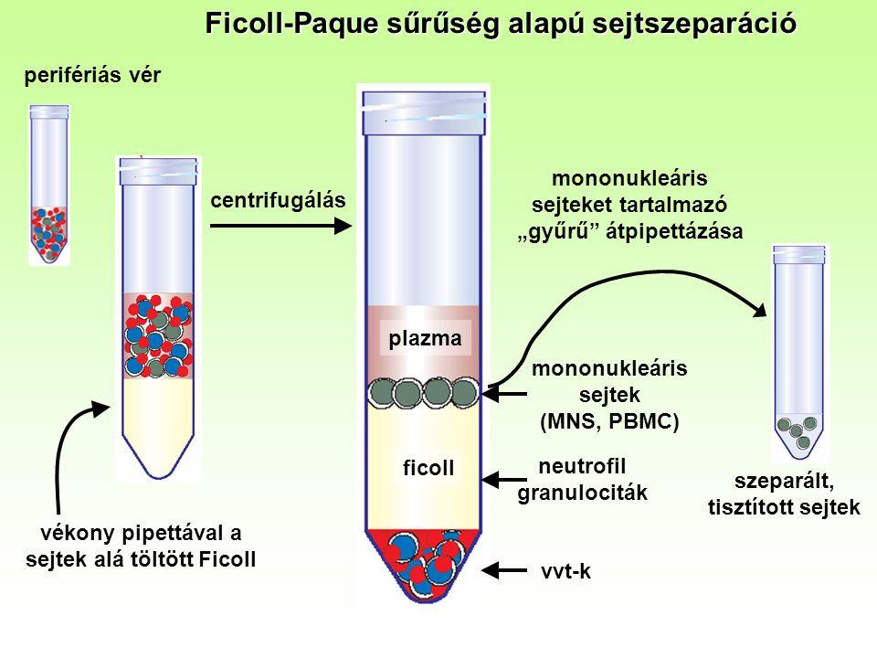 """Ficoll-Paque sűrűség alapú sejtszeparáció perifériás vér vékony pipettával a sejtek alá töltött Ficoll centrifugálás szeparált, tisztított sejtek plazma ficoll vvt-k mononukleáris sejtek (MNS, PBMC) neutrofil granulociták mononukleáris sejteket tartalmazó """"gyűrű átpipettázása"""
