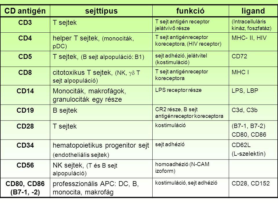 CD antigénsejttípusfunkcióligand CD3T sejtek T sejt antigén receptor jelátvivő része (Intracelluláris kináz, foszfatáz) CD4helper T sejtek, (monociták, pDC) T sejt antigénreceptor koreceptora, (HIV receptor) MHC- II, HIV CD5T sejtek, (B sejt alpopuláció: B1) sejt adhézió, jelátvitel (kostimuláció) CD72 CD8citotoxikus T sejtek, (NK,  T sejt alpopuláció) T sejt antigénreceptor koreceptora MHC I CD14Monociták, makrofágok, granulociták egy része LPS receptor része LPS, LBP CD19B sejtek CR2 része, B sejt antigénreceptor koreceptora C3d, C3b CD28T sejtek kostimuláció (B7-1, B7-2) CD80, CD86 CD34hematopoietikus progenitor sejt (endotheliális sejtek) sejt adhézió CD62L (L-szelektin) CD56NK sejtek, (T és B sejt alpopuláció) homoadhézió (N-CAM izoform) CD80, CD86 (B7-1, -2) professzionális APC: DC, B, monocita, makrofág kostimuláció, sejt adhézió CD28, CD152