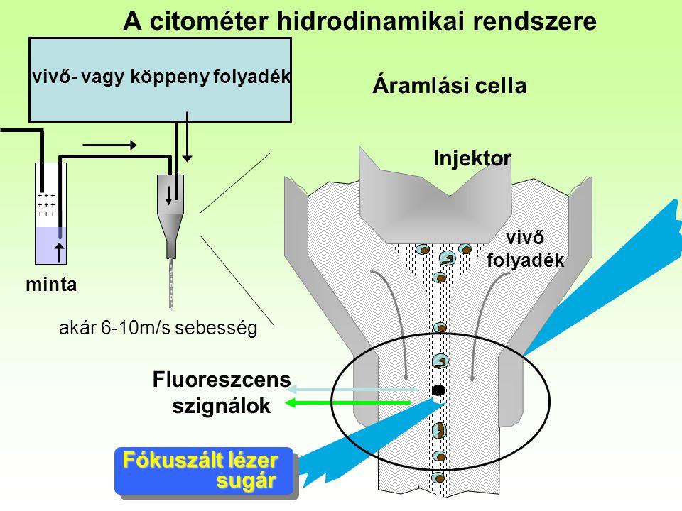 A citométer hidrodinamikai rendszere Injektor Fluoreszcens szignálok Fókuszált lézer sugár vivő folyadék akár 6-10m/s sebesség + + + minta vivő- vagy