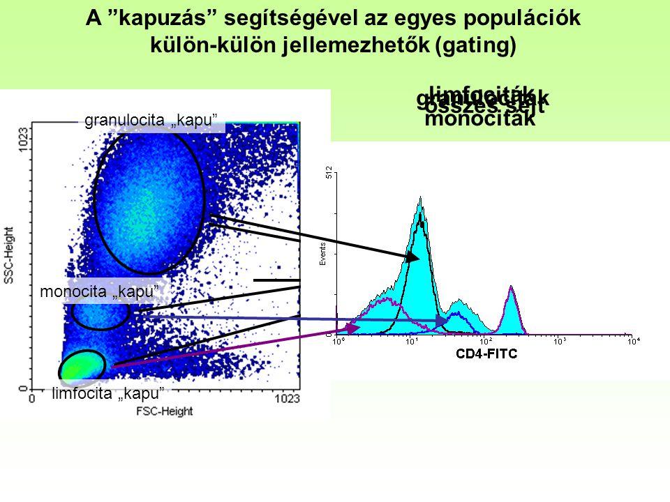 """összes sejt granulociták monociták limfociták A """"kapuzás"""" segítségével az egyes populációk külön-külön jellemezhetők (gating) granulocita """"kapu"""" monoc"""