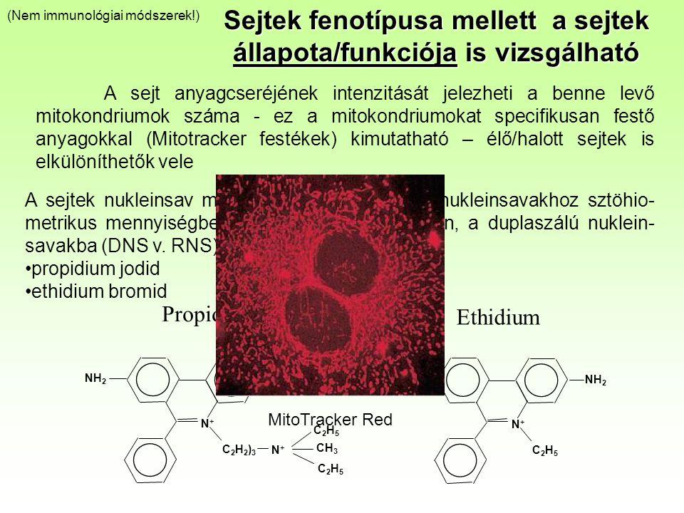 A sejtek nukleinsav mennyisége kimutatható a nukleinsavakhoz sztöhio- metrikus mennyiségben kötődő festékekkel. Ilyen, a duplaszálú nuklein- savakba (