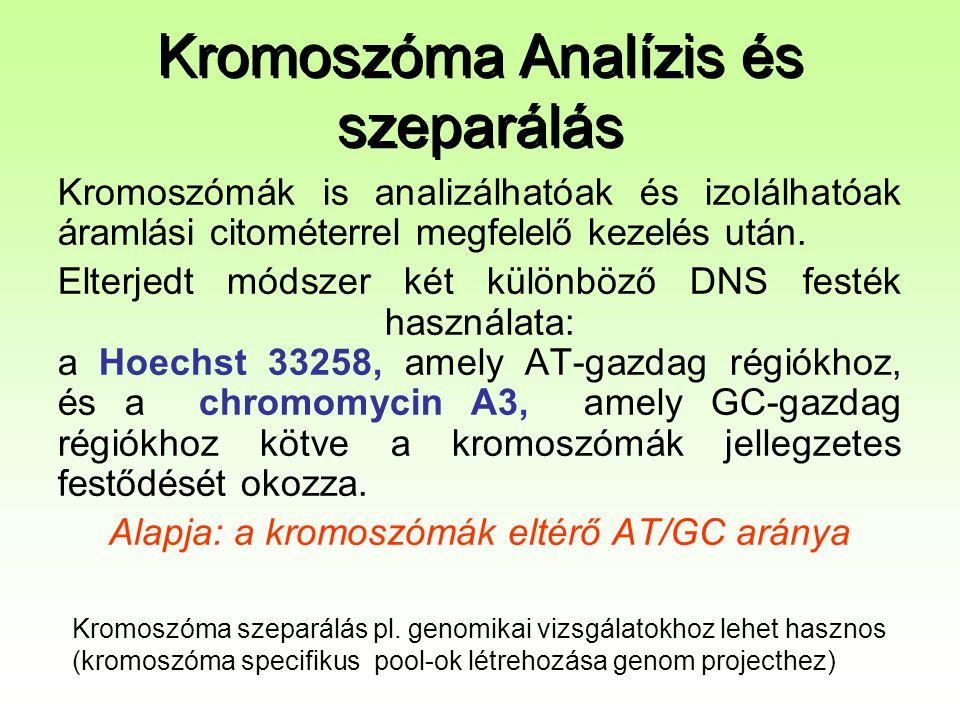 Kromoszóma Analízis és szeparálás Kromoszómák is analizálhatóak és izolálhatóak áramlási citométerrel megfelelő kezelés után. Elterjedt módszer két kü