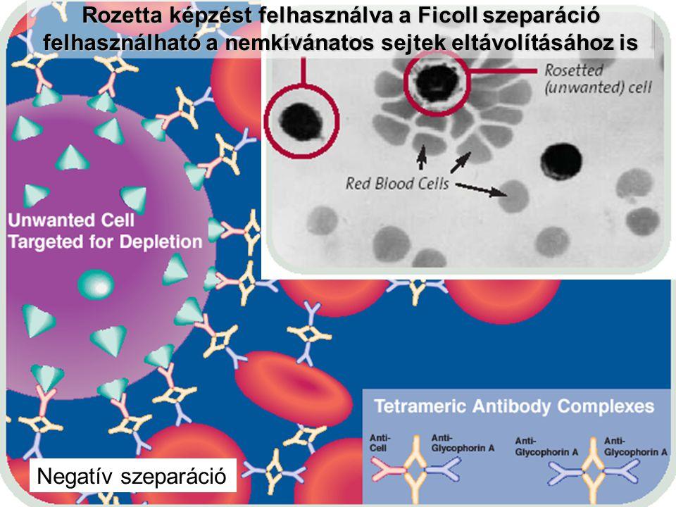 Rozetta képzést felhasználva a Ficoll szeparáció felhasználható a nemkívánatos sejtek eltávolításához is Negatív szeparáció