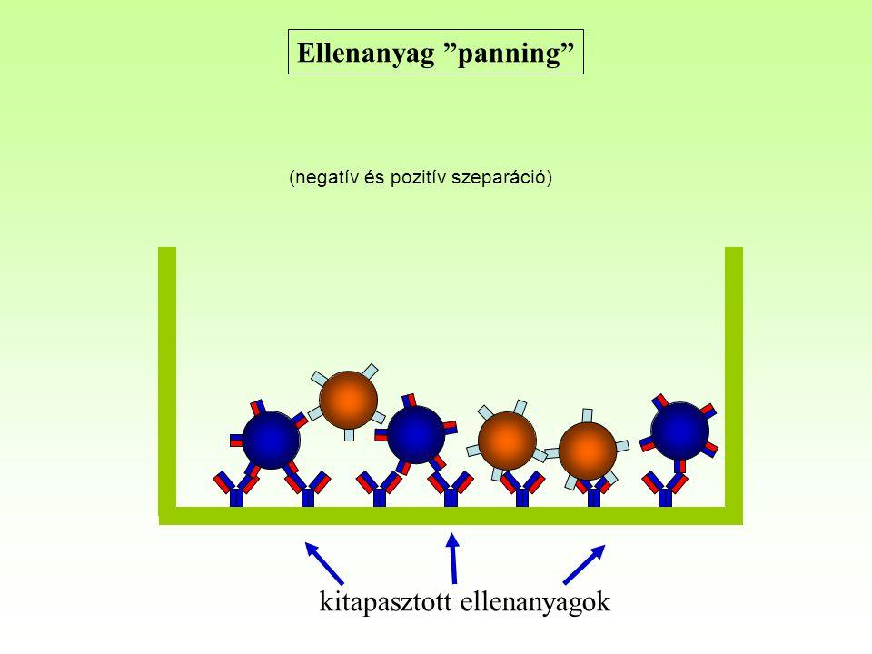"""Ellenanyag """"panning"""" kitapasztott ellenanyagok (negatív és pozitív szeparáció)"""