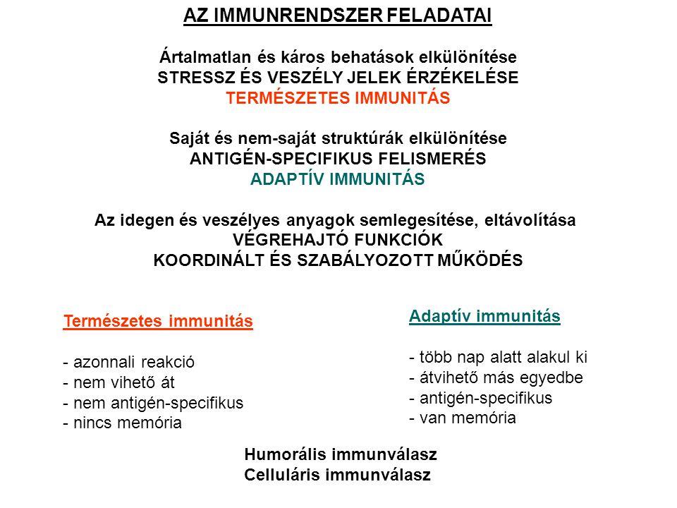 AZ IMMUNRENDSZER MŰKÖDÉSÉBEN RÉSZTVEVŐ MOLEKULÁK Sejtfelszíni molekulák: markerek (CD) receptorok (BCR, TCR, MHCI, MHCII, PRR, citokin, hormon, lipid kötő stb.) kostimuláló molekulák adhéziós molekulák (integrinek, szelektinek, mucinok, stb.) Oldott molekulák: ellenanyagok citokinek komplement komponensek metabolitok