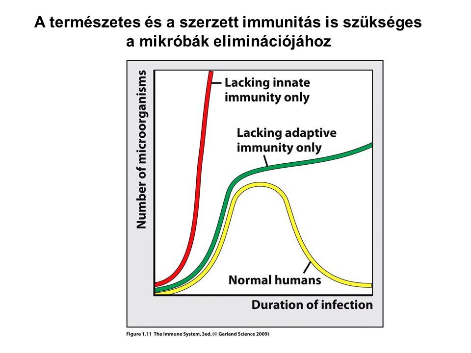 A természetes és a szerzett immunitás is szükséges a mikróbák eliminációjához