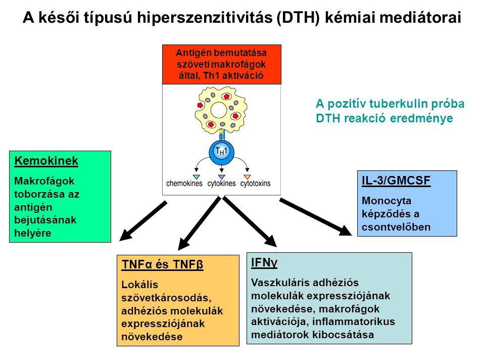 A késői típusú hiperszenzitivitás (DTH) kémiai mediátorai A pozitív tuberkulin próba DTH reakció eredménye Kemokinek Makrofágok toborzása az antigén b