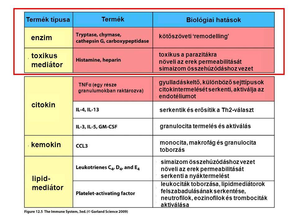 citokin kemokin lipid- mediátor enzim toxikus mediátor Termék típusa Termék Biológiai hatások kötőszöveti 'remodelling' toxikus a parazitákra növeli a