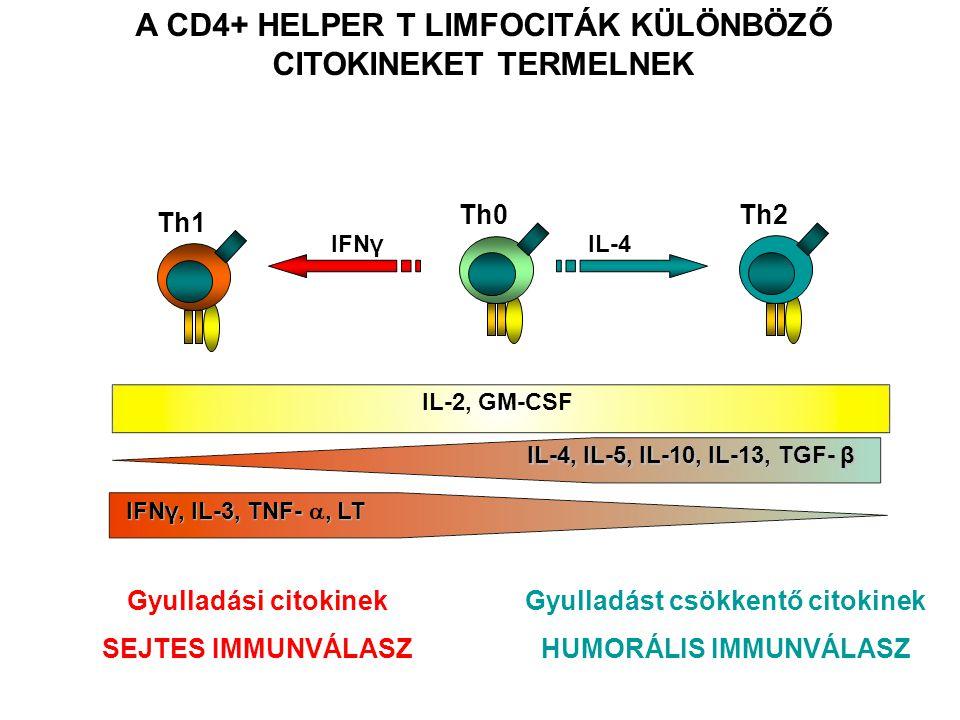 Th1 DC Φ IFNγ Th2B IL - 4 A Th2 sejtek B limfocitákat képesek aktiválni Csíraközpont kialakulása Affinitás érés Izotípus váltás Memória B sejt képződés A Th1 sejtek dendritikus sejteket és makrofágokat aktiválnak A SEGÍTŐ T LIMFOCITA ALPOPULÁCIÓK KÜLÖNBÖZŐ ANTIGÉN PREZENTÁLÓ SEJTEKKEL MŰKÖDNEK EGYÜTT