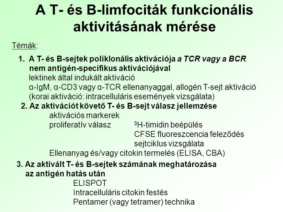 """Receptorok ligand általi aktivációja (""""keresztkötés ) (pillanatszerű) foszforilációs lépések (másodpercek-percek) - Western blot - Bead array ic Ca 2+ szint emelkedés - FACS, mikroszkópia Génaktiváció - RT-PCR Citokin szintézis Citokin szekréció - IC citometria - ELISA, ELISPOT Ez történik az antigénreceptorokkal (TCR, BCR), és sok más receptorral is (citokinreceptorok) Sejtciklusba lépés/apoptózis - DNS tartalom - IN antigének Sejtosztódás - 3 H-timidin, CFSE, MTT A limfociták aktivációja Vizsgálatuk gyakran a specifikus antigén- ellenanyag kapcsolódáson alapul"""