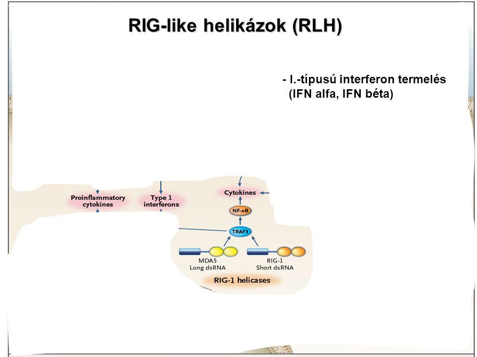 RIG-like helikázok (RLH) - I.-típusú interferon termelés (IFN alfa, IFN béta)