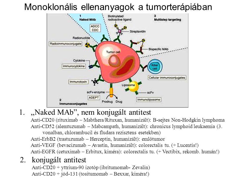 """Monoklonális ellenanyagok a tumorterápiában 1.""""Naked MAb"""", nem konjugált antitest Anti-CD20 (rituximab – Mabthera/Rituxan, humanizált): B-sejtes Non-H"""
