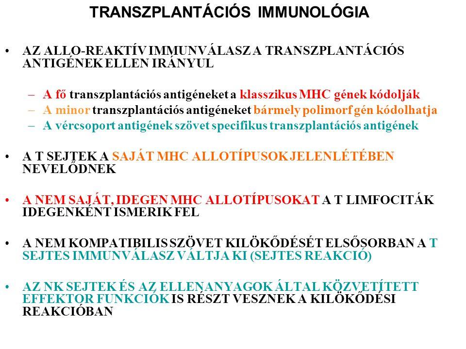 Veseátültetés Indikációk: végstádiumú krónikus veseelégtelenség Donorok: cadaver, elő egészséges személy szervdonációja Immunszuppresszió: hiperakut kilökődés MHC-matching miatt ma már ritkaság, recipiens savójával és donor lymphocytákkal keresztpróba végzendő megelőzésére akut/krónikus ellen: cyclosporin A, tacrolimus + mycopheolat mofetil, anti-CD25 monoklonális at., számos kísérleti monoklonális at.