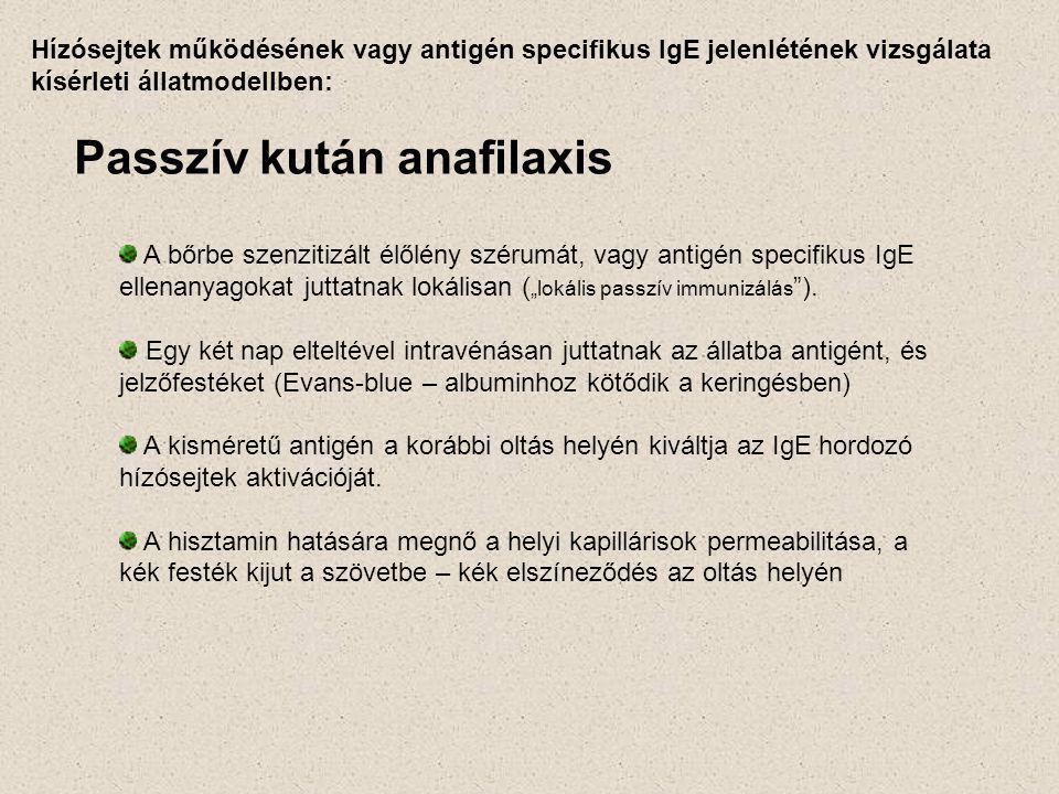 """Hízósejtek működésének vagy antigén specifikus IgE jelenlétének vizsgálata kísérleti állatmodellben: Passzív kután anafilaxis A bőrbe szenzitizált élőlény szérumát, vagy antigén specifikus IgE ellenanyagokat juttatnak lokálisan ( """"lokális passzív immunizálás )."""