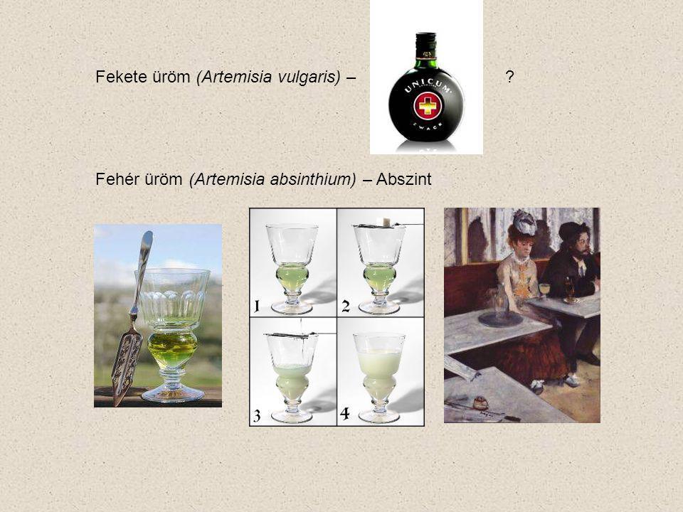 Fekete üröm (Artemisia vulgaris) –? Fehér üröm (Artemisia absinthium) – Abszint
