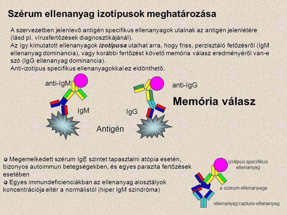 Szérum ellenanyag izotípusok meghatározása A szervezetben jelenlevő antigén specifikus ellenanyagok utalnak az antigén jelenlétére (lásd pl.