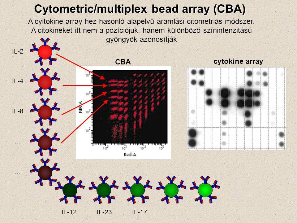 Cytometric/multiplex bead array (CBA) A cyitokine array-hez hasonló alapelvű áramlási citometriás módszer. A citokineket itt nem a pozíciójuk, hanem k