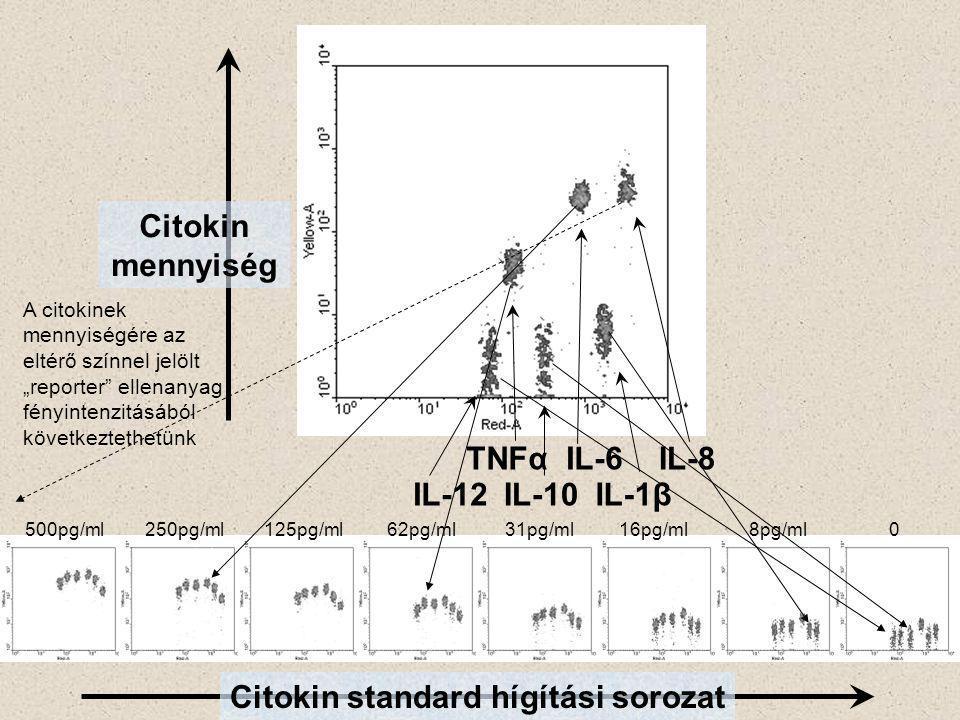 """IL-8 IL-1β IL-6 IL-12IL-10 TNFα Citokin mennyiség Citokin standard hígítási sorozat 500pg/ml250pg/ml125pg/ml62pg/ml31pg/ml16pg/ml8pg/ml 0 A citokinek mennyiségére az eltérő színnel jelölt """"reporter ellenanyag fényintenzitásából következtethetünk"""