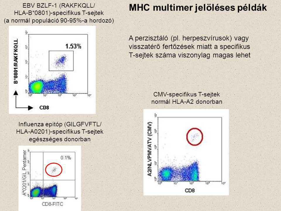 CMV-specifikus T-sejtek normál HLA-A2 donorban EBV BZLF-1 (RAKFKQLL/ HLA-B*0801)-specifikus T-sejtek (a normál populáció 90-95%-a hordozó) Influenza epitóp (GILGFVFTL/ HLA-A0201)-specifikus T-sejtek egészséges donorban MHC multimer jelöléses példák A perzisztáló (pl.