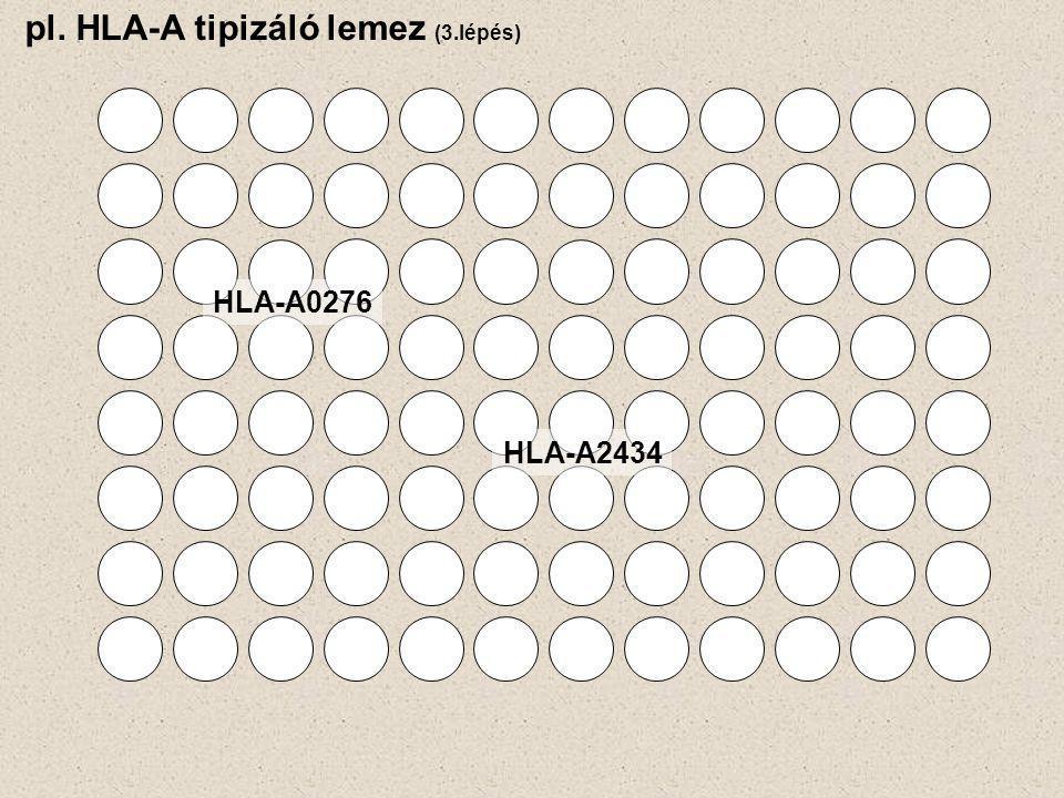 pl. HLA-A tipizáló lemez (3.lépés) HLA-A0276 HLA-A2434