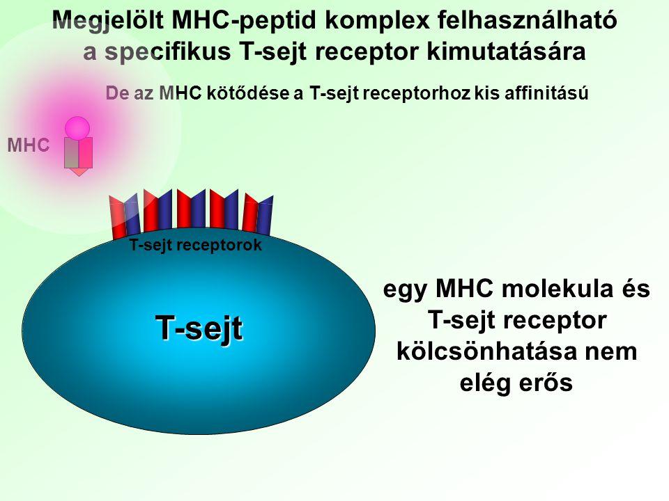 De az MHC kötődése a T-sejt receptorhoz kis affinitású egy MHC molekula és T-sejt receptor kölcsönhatása nem elég erős Megjelölt MHC-peptid komplex fe