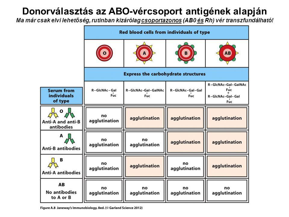 Donorválasztás az ABO-vércsoport antigének alapján Ma már csak elvi lehetőség, rutinban kizárólag csoportazonos (AB0 és Rh) vér transzfundálható!